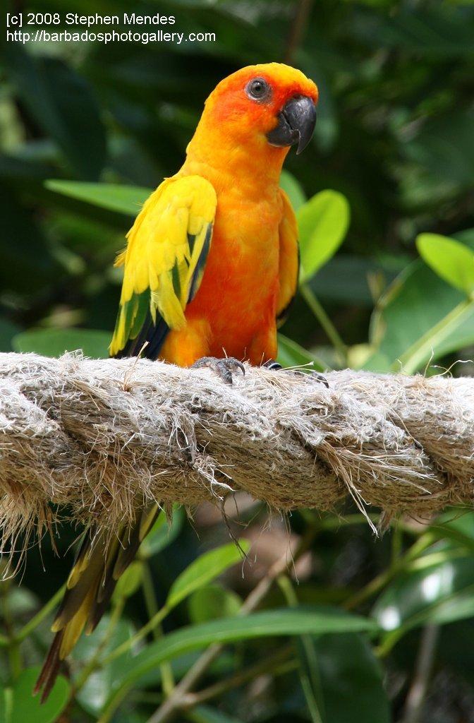 Barbados Photo Gallery - Graeme Hall Nature Sanctuary